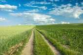 Long Dirt Road Through A Green Field Of Wheat And Corn, Horizon And White Clouds On A Blue Sky poster