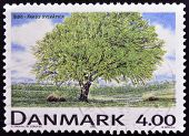 DENMARK - CIRCA 1999: A stamp printed in Denmark shows Fagus sylvatica circa 1999