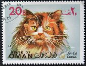 OMAN - CIRCA 1971: stamp printed in State of Oman shows Turkish Angora cat, circa 1971