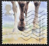 UNITED KINGDOM - CIRCA 2000: A stamp printed in Great Britain shows Horses Hooves (Trans Penine Trai