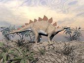 Vigilent Stegosaurus