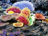 Coral Colorful