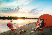 Постер, плакат: Кошка и собака расслабляющий