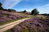 stock photo of ling  - path way between hills covered with blossoming heather - JPG