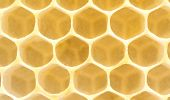 Honeycomb. Extremely Close-Up