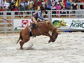 Rodeo Bronco Ride