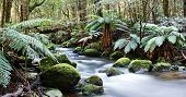Rainforest River Panorama