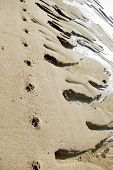 Animal Traces On Coastal Sand poster