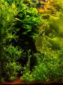 Background of the green aquarium seaweed underwater