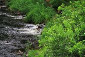 stock photo of brook trout  - A shallow brook flowing from different sources - JPG