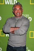Cesar Millan at the National Geographic Channels'  2013 Winter TCA Cocktail Party, Langham Huntington Hotel, Pasadena, CA 01-03-13