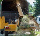 stock photo of arborist  - Wood Chipper Shredding a Tree into a Truck - JPG