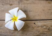 White Flower On Wood Floors