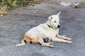 pic of stray dog  - Stray Dog Look  - JPG