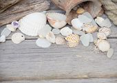 Marine background - seashells, rope and amphora