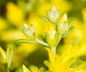 Yellow Flowers By Spring