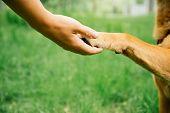 Dog And Human Handshake