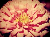 Beautiful flower in nature edit by filter images