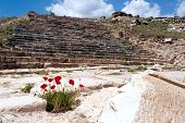 Poppy Flowers In Pamukkale
