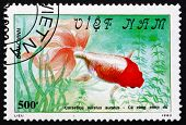 Postage Stamp Vietnam 1990 Red-headed Goldfish, Freshwater Fish