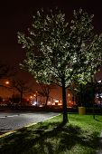 pic of night-blooming  - Blooming tree in the summer night on the city - JPG