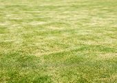 Lawn And Burn Marks