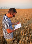Hipster Poet In Wheat Field