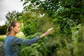 image of elderflower  - Young woman picking elderflower to make an infusion at home - JPG