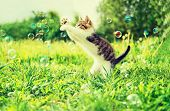 pic of bubbles  - Cute little kitten playing with soap bubbles on summer grass outdoor - JPG