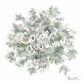 Vector watercolor autumn leaves maple leaf flora