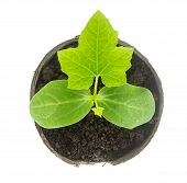 Top View Of Small Plant Isolated On White