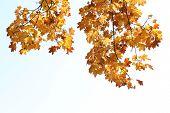 Beautiful autumn leaves