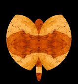 illustration of a butterfly with bubinga wood