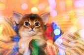 Smiling Kitten