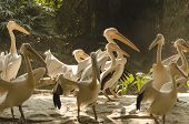 birds playful