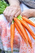 Ripe Raw Carrots In Hands