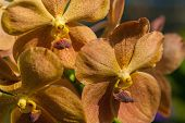 stock photo of orquidea  - A branch of yellow - JPG