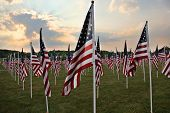 Field Of Heros Flags