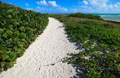 Path to the sea of white sand. Atlantic Ocean. Cayo Guillermo. C