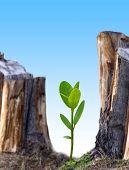 Plant New Tree