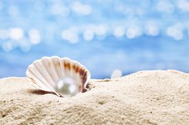 stock photo of pearl-oyster  - Pearl oyster in the sand - JPG