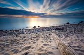 pic of driftwood  - Beautifu rocky sea shore with driftwood trees trunks at sunrise or sunset - JPG