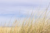 foto of dune grass  - Picture of dune grass in sand on the coast of the Baltic Sea  - JPG
