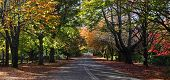 stock photo of tree lined street  - A tree lined avenue in Mt Wilson in the early stages of autumn - JPG