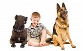 picture of staffordshire-terrier  - Laughing cute boy sitting with two dogs of breed Staffordshire Terrier and German Shepherd - JPG