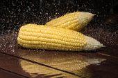 stock photo of sweet-corn  - Fresh sweet corn on wooden table  - JPG