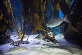 stock photo of algae  - Fish swimming in a tank with algae at the aquarium - JPG
