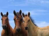 Horses On A Summer Day