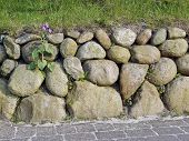 picture of fieldstone-wall  - Frisian stone wall on the Island of Sylt Germany with a flower - JPG