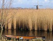Dutch Reed Landscape 1